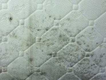 muffa sul materasso